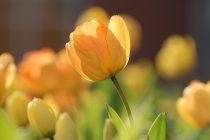 【COLOR通信-No.6-】「スプリングカラー」春の色ってどんな色?