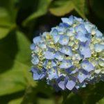 【COLOR通信-No.7-】「サマーカラー」夏の色ってどんな色?