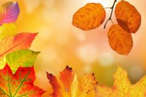 【COLOR通信-No.8-】「オータムカラー」秋の色ってどんな色?